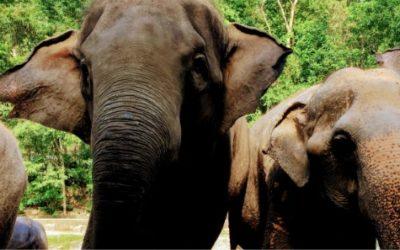 子連れタイ旅行ならカオキアオ動物園が超おすすめ。理由は動物との触れ合い【動画あり】